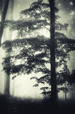 Giant tree in dark enchanted woods Stock Photos