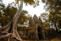 Giant tree with deep story temple in Cambodia. unis co world heritage. To go with coffee and fresh juice stock image