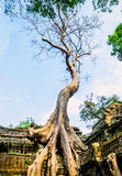 Giant Tree On The Roof Of The Tample Royalty Free Stock Photography