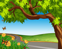 A giant tree at the road stock illustration
