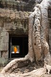 Giant tree roots and monk in temple Ta Prom Angkor wat Royalty Free Stock Photos