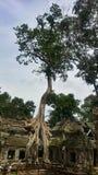 Giant tree at Ta Phrom Stock Photo