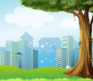 A giant tree with vine plants across the high buildings Royalty Free Stock Images
