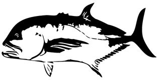 Giant Trevally GT fish vector Stock Photos