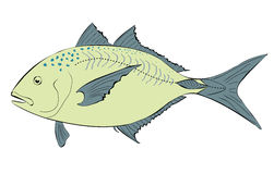 Giant trevally illustration Royalty Free Stock Image
