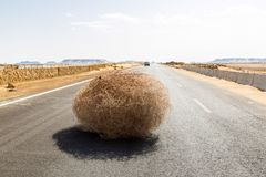 Giant tumbleweed on the highway with sandy dunes, between el-Bahariya oasis and Al Farafra oasis, Western Desert of Egypt. royalty free stock images
