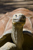 Giant turtle Royalty Free Stock Photo