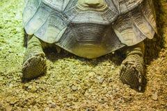 Giant turtle paws Stock Photo