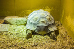 Giant turtle sleeping Royalty Free Stock Photo