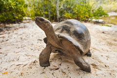 Giant turtles. Seychelles Royalty Free Stock Images