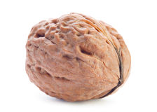 Giant walnut Royalty Free Stock Image