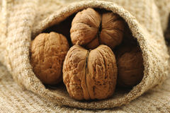 Giant walnut in shell. On the background of natural burlap Royalty Free Stock Photos