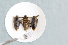 Giant Water Bug is edible insect for eating as food Insects cooking deep-fried snack on white plate with fork on gray background,. It is good source of protein stock image