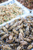 Giant water bug. Stock Photos
