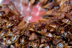 Giant water bug. Giant water bug, insect cooking royalty free stock photos