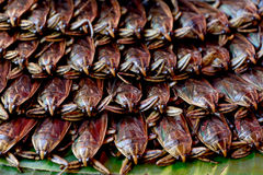 Giant water bug. Giant water bug, insect cooking stock image