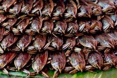 Giant water bug. Stock Image