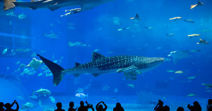 Giant whale shark of fantasy underwate Stock Images