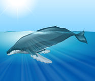 Giant whale swimming in the ocean Royalty Free Stock Image