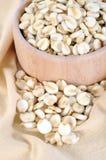 Giant white corn Stock Image