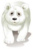 A giant white polar bear Stock Images
