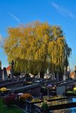 Giant willow tree on  a cemetery Stock Images