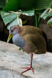 Giant Wood Rail Royalty Free Stock Images