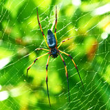 Giant Wood Spider - Nephila Maculata / Nephila Pilipes Stock Images