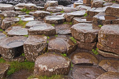 Giants Causeway. The Giants Causeway in Northern Ireland is a world heritage site. This image shows the predominantly hexagonal rocks of the causeway covered in Royalty Free Stock Image