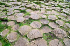 Giants Causeway background Royalty Free Stock Images