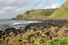 Giants Causeway Coast. Cliffs of the Giant's Causeway, Antrim, Northern Ireland royalty free stock images