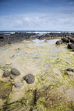 Giants Causeway Coast, County; Antrim Royalty Free Stock Image