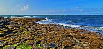 Giants Causeway Seaswept Algae over Hexagon Blocks Royalty Free Stock Image