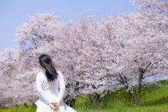 Giapponese Cherry Blossom fotografia stock libera da diritti