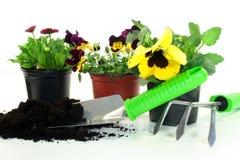 Giardinaggio Immagine Stock