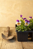 Giardinaggio. Fotografie Stock