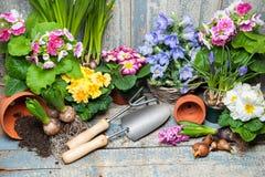 Giardinaggio fotografia stock
