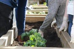 Giardinaggio Immagini Stock Libere da Diritti