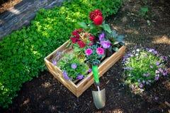 Giardinaggio Cassa in pieno delle piante splendide e degli strumenti di giardino pronti per la piantatura in Sunny Garden Impiant immagine stock libera da diritti