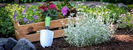Giardinaggio Cassa in pieno delle piante splendide pronte per la piantatura nel giardino Il giardino della primavera funziona il  immagini stock libere da diritti