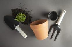 Giardinaggio della sorgente Piantatura della pianta d'appartamento Succulente, pianta del cactus Strumenti di giardino, vaso di f immagini stock