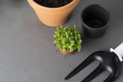 Giardinaggio della sorgente Piantatura della pianta d'appartamento Succulente, pianta del cactus Strumenti di giardino, vaso di f fotografia stock libera da diritti