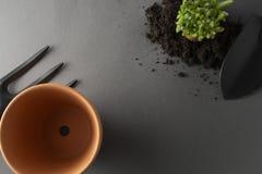 Giardinaggio della sorgente Piantatura della pianta d'appartamento Succulente, pianta del cactus Strumenti di giardino, vaso di f immagine stock libera da diritti