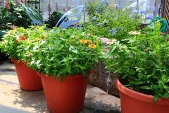 Giardinaggio di fiore dell'interno Fotografia Stock Libera da Diritti