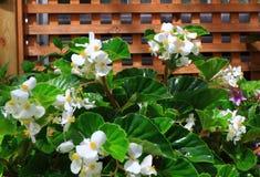 Giardinaggio di fiore dell'interno Immagini Stock
