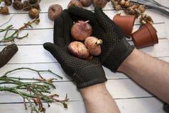 Giardinaggio di hobby Le mani maschii tengono con attenzione la materia vegetale Strumenti di giardinaggio nuovi, cassetto della  Fotografie Stock