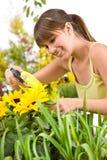 Giardinaggio - donna che spruzza acqua sul girasole Immagini Stock