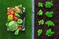 Giardinaggio e produzione alimentare Fotografie Stock
