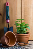 Giardinaggio - erba del basilico in POT Immagini Stock Libere da Diritti
