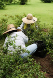Giardinaggio insieme Fotografia Stock